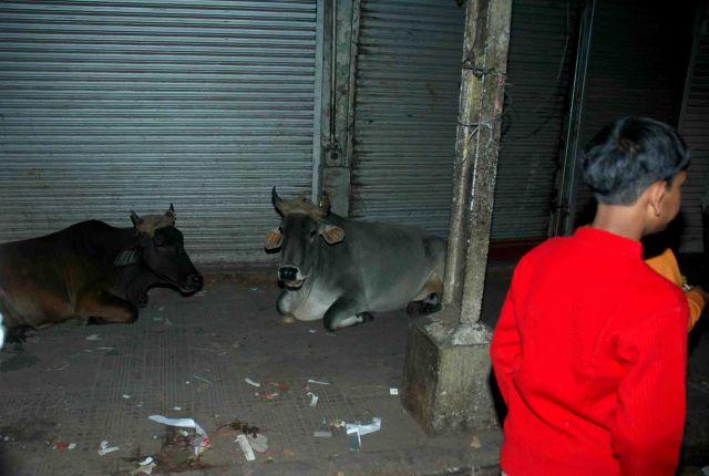 Zdjęcia: old delhi, tęknota za oborą, INDIE
