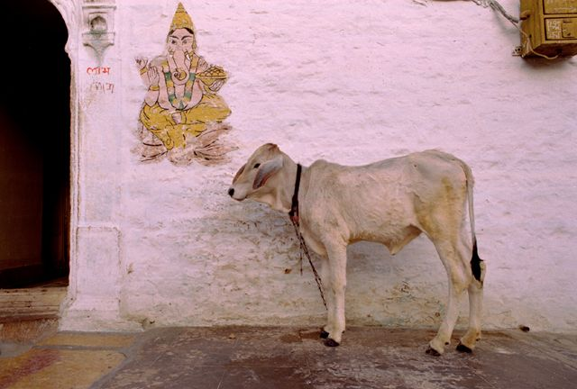 Zdjęcia: Jaisalmer, Rajasthan, Przed domem weselnym, INDIE