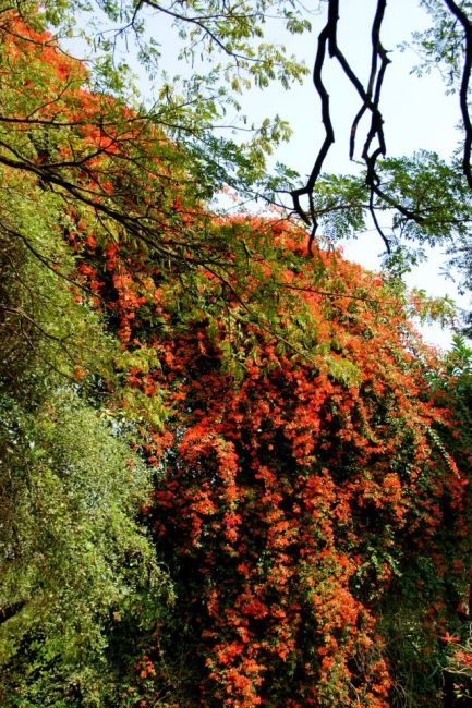 Zdjęcia: Bengalore, Bengalore, Kwiaty, INDIE