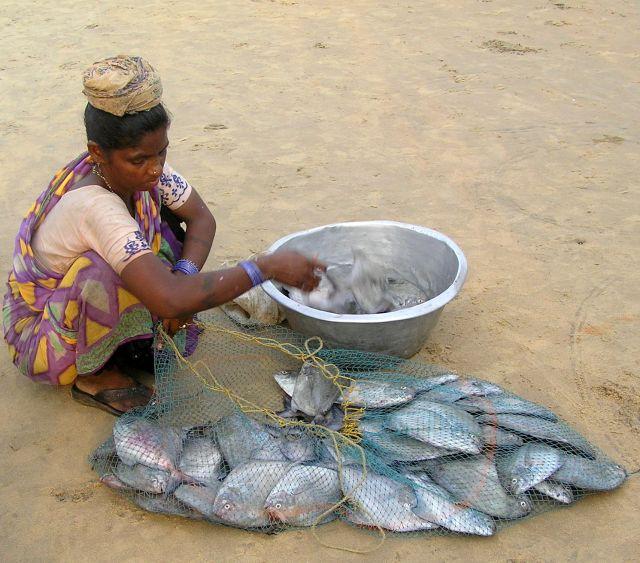 Zdjęcia: Puri, Orissa, efekt połowów, INDIE