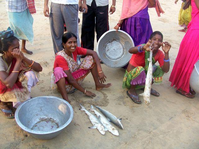 Zdjęcia: Puri, Orissa, kup pan rekinka!, INDIE