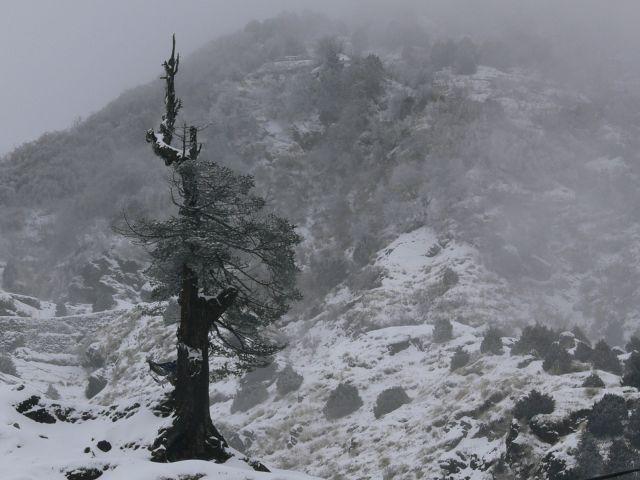 Zdjęcia: Gangtok, Sikkim, Przedwiośnie w Himalajach, INDIE