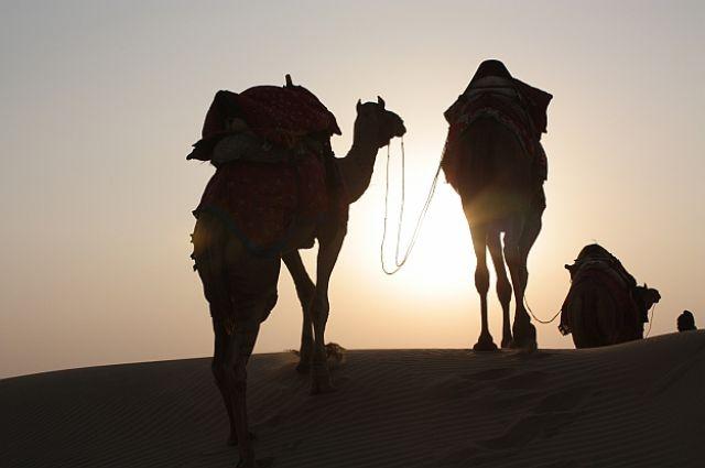 Zdjęcia: Gdzieś w Indiach, W stronę słońca, INDIE