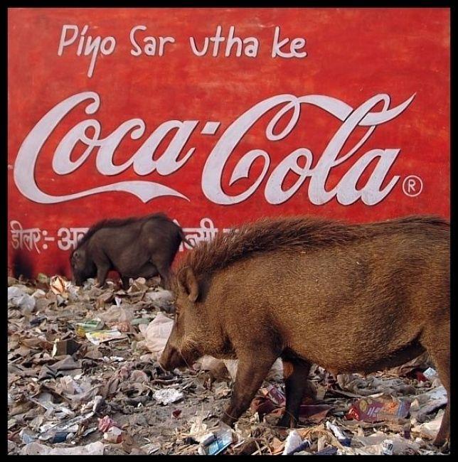 Zdjęcia: Indie, ..., INDIE