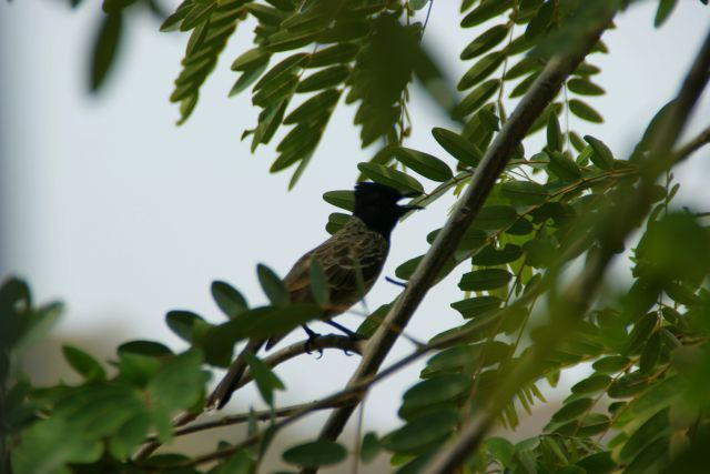 Zdjęcia: Indore, Indore, Ptok, INDIE