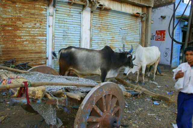 Zdjęcia: Mandi, Mandi, Odpoczynek, INDIE