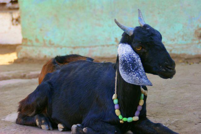 Zdjęcia: Mandi, Mandi, Urodziny  ma  , INDIE