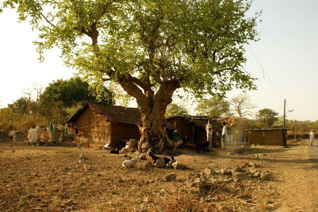 Zdjęcia: Mandi, Mandi, Jak to wioska, INDIE