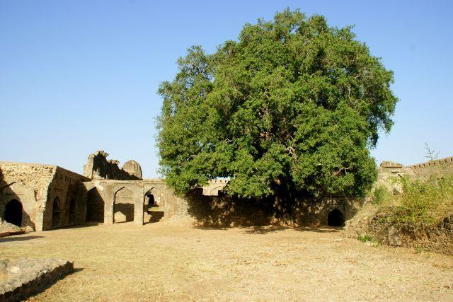 Zdjęcia: Mandi, Mandi, Za murami  , INDIE