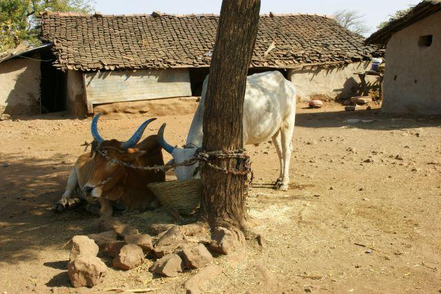 Zdjęcia: Mandi, Mandi, Sjesta, INDIE