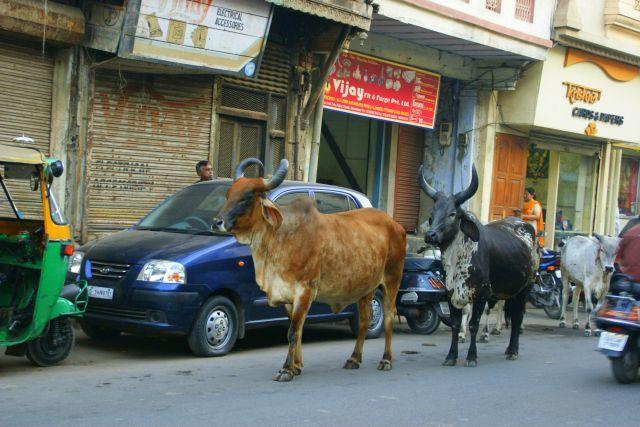 Zdjęcia: Indore, Indore, Damy  nie damy, INDIE