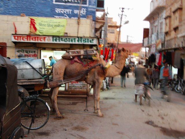 Zdjęcia: Jaisalmer - pustynia Thar, Rajasthan, transport towarowy..., INDIE