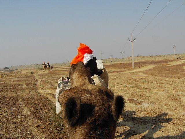 Zdjęcia: Jaisalmer - pustynia Thar, Rajasthan, na wielbłądach, INDIE