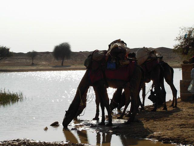 Zdjęcia: Jaisalmer - pustynia Thar, Rajasthan, oaza, INDIE
