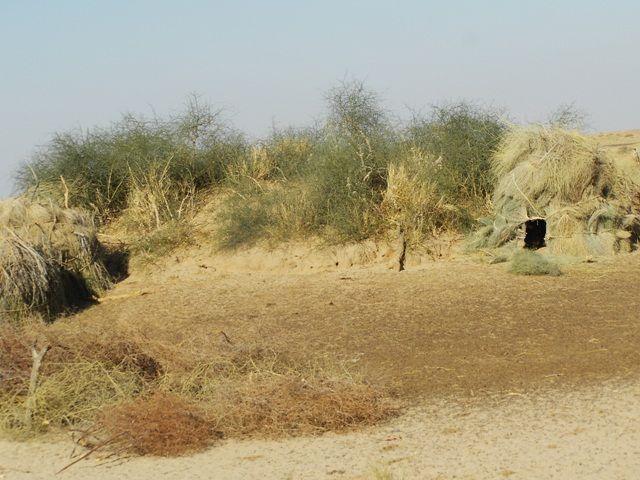 Zdjęcia: Jaisalmer - pustynia Thar, Rajasthan, pustynne chatki, INDIE