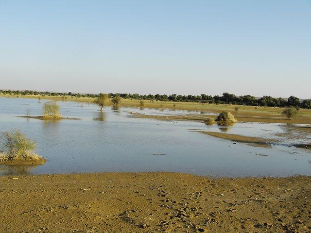 Zdjęcia: Jaisalmer - pustynia Thar, Rajasthan, nad brzegiem..., INDIE