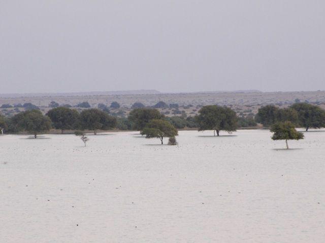 Zdjęcia: Jaisalmer - pustynia Thar, Rajasthan, nad jeziorem, INDIE