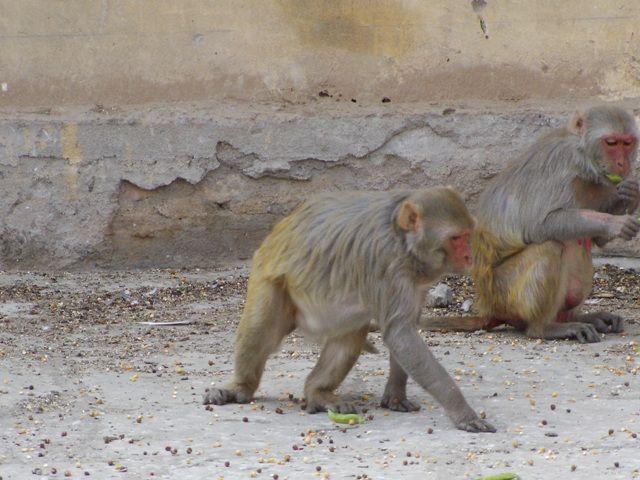 Zdjęcia: Jaipur, Rajasthan, mieszkańcy różowego miasta, INDIE