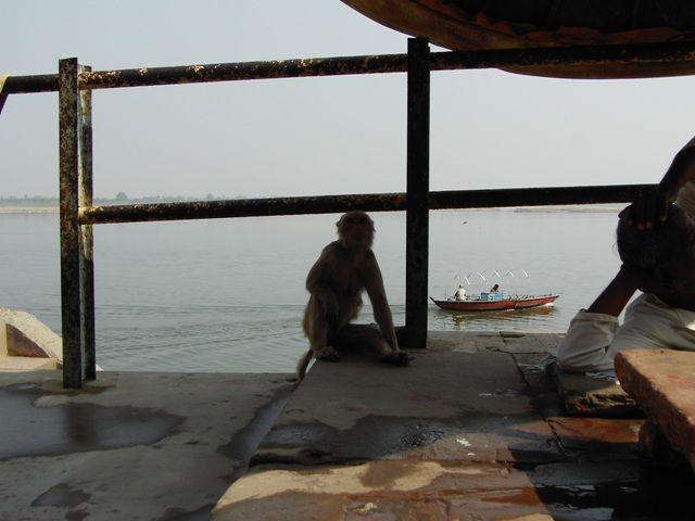 Zdjęcia: Varanasi, Uttar Pradesh, w zgodzie, INDIE