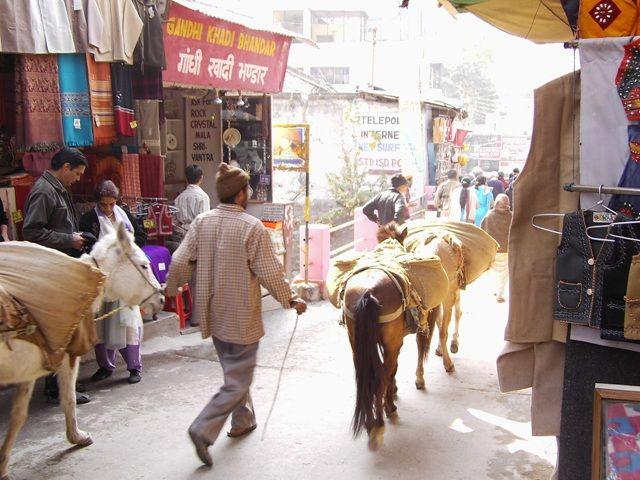 Zdjęcia: Rishikesh, Uttaranchal, osiołki transportowe, INDIE