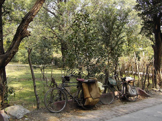 Zdjęcia: Rishikesh, Uttaranchal, w cieniu drzew, INDIE