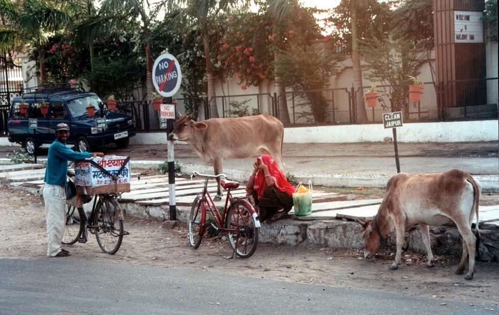 Zdjęcia: Jaipur, Radżastan, Moje Indie - Konkurs, INDIE