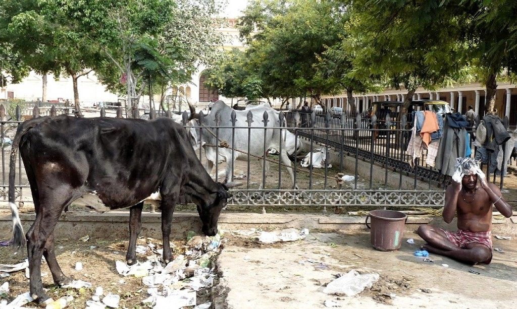 Zdjęcia: Indie, Poranna toaleta , INDIE