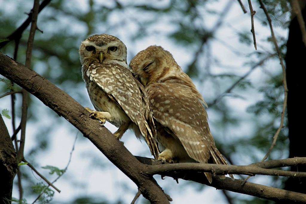 Zdjęcia: Park Narodowy Keoladeo, Czy to jest miłość ,czy to jest kochanie...?, INDIE