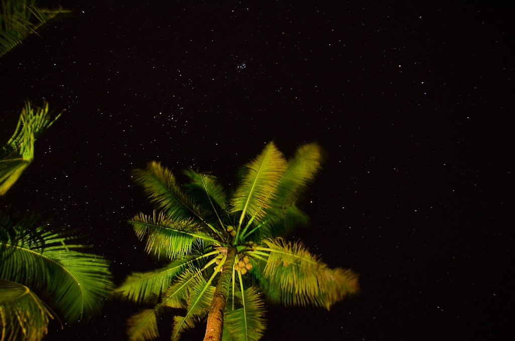 Zdjęcia: Verkala , Kerala, Nocna palma, INDIE