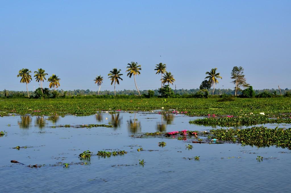 Zdjęcia: Alappuzha, Kerala, Kerala Backwaters, INDIE