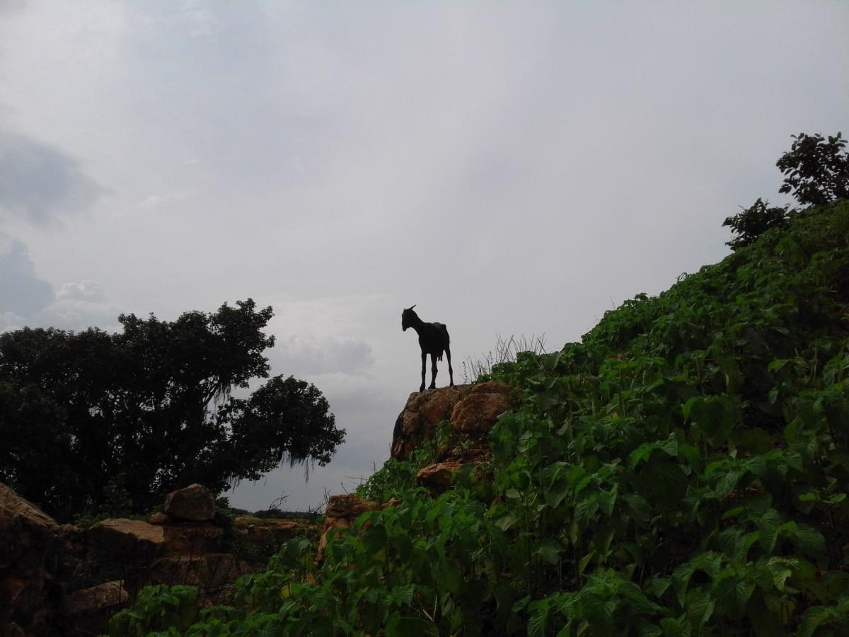 Zdjęcia: Khajuraho, Madhya Pradesh, Khajuraho, INDIE
