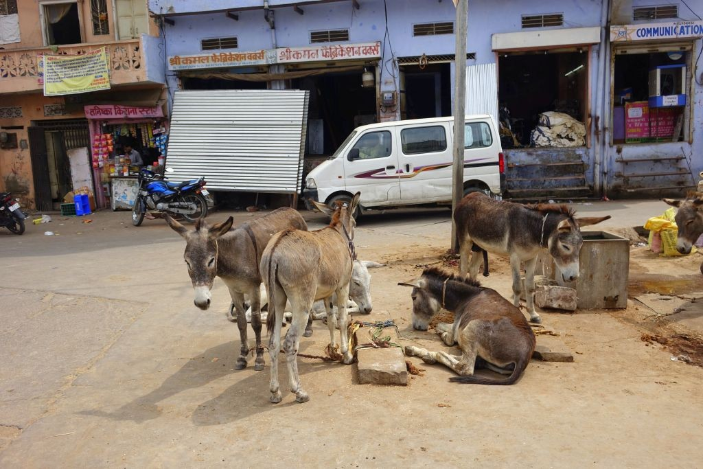 Zdjęcia: New Delhi, New Delhi, Ośle rondo, INDIE