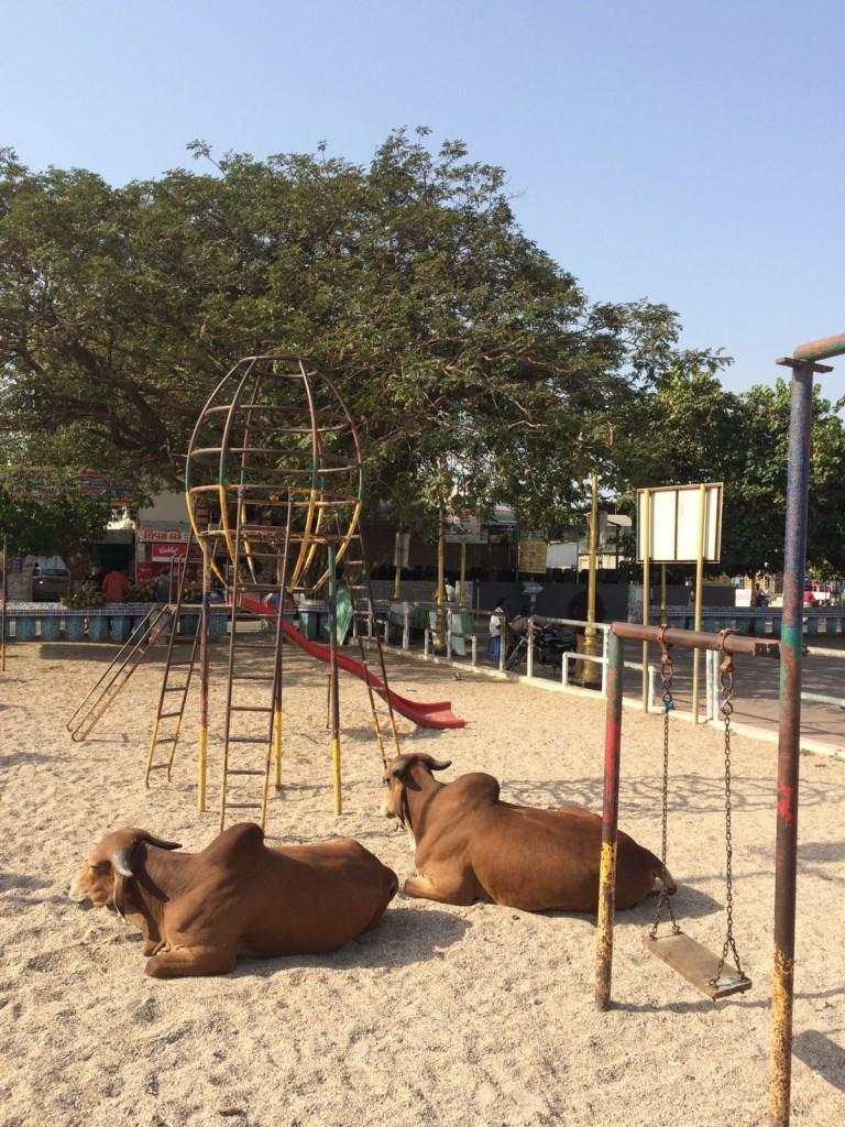 Zdjęcia: Diu, Gujarat, Plac zabaw, INDIE