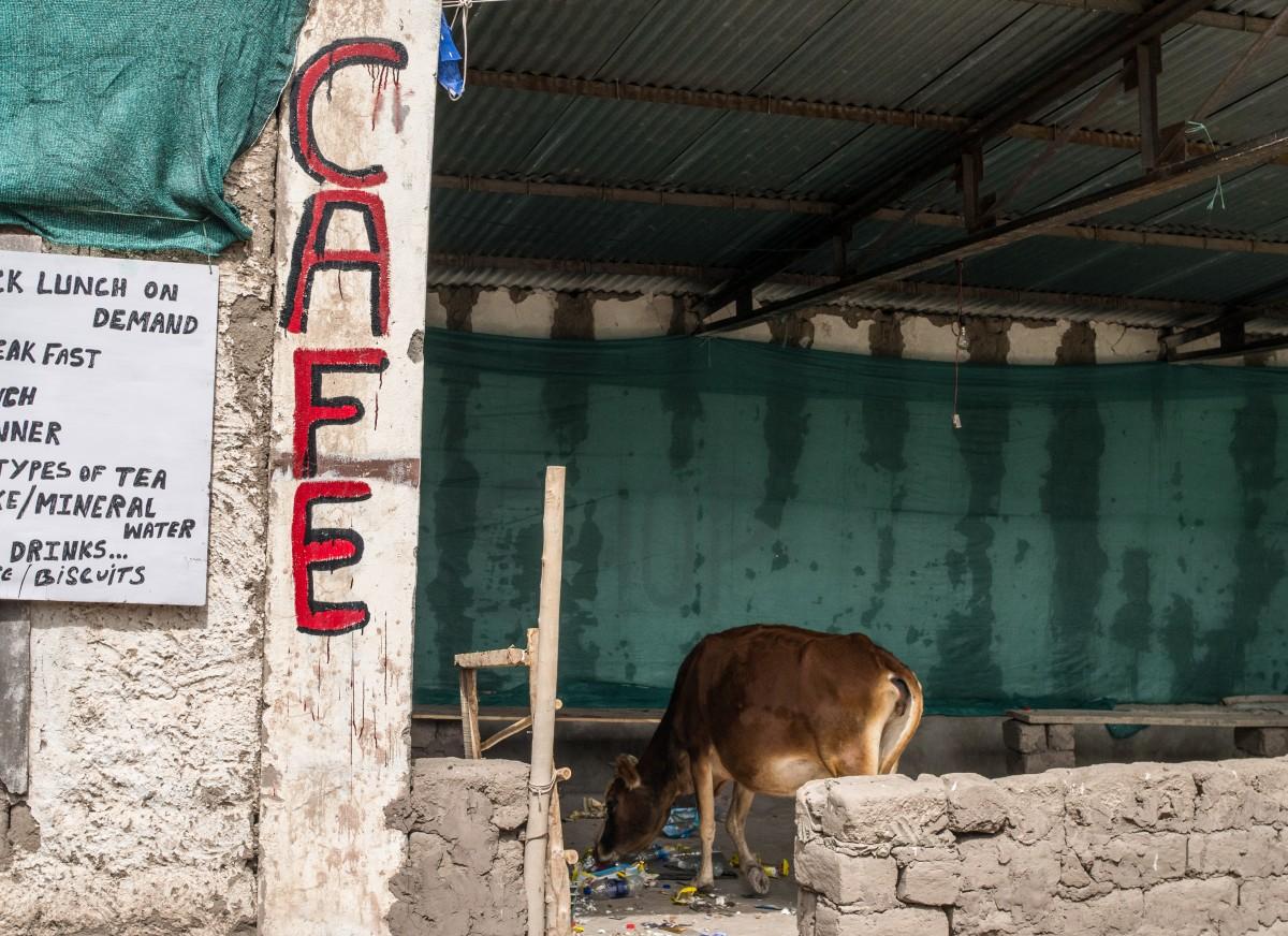 Zdjęcia: Stok, Ladakh, chcieliśmy wpaść na kawę :), INDIE