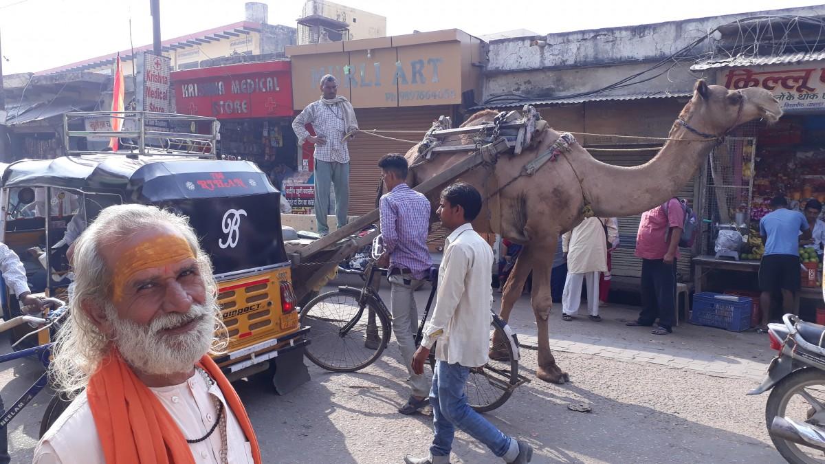 Zdjęcia: Vrindavan , portret z wielbłądem , INDIE