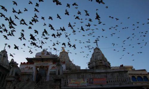Zdjecie INDIE / Rajasthan / Udaipuer / Ptaszyska