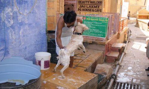 Zdjęcie INDIE / -Rajasthan / Jaisalmer / Szorowanie psa