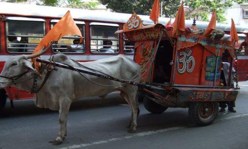 Zdjęcie INDIE / Bombaj / Colaba / normalka na bobmajskiej ulicy
