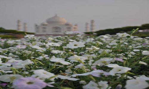 Zdjecie INDIE / Indie / Agra / Taj