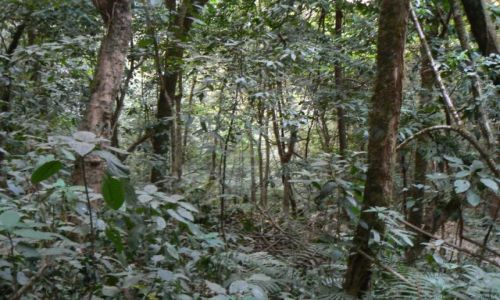 INDIE / Mizoram / niedaleko Aizawl / Dżungla w Mizoramie
