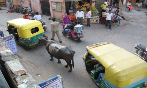 Zdjecie INDIE / - / AGRA / Korek w Agrze