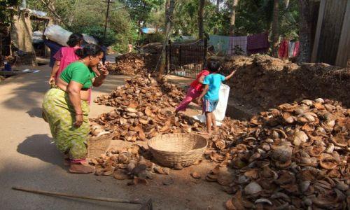 Zdjecie INDIE / Goa / okolice plaży Palolem / Orzechy kokosowe to nadal nieły interes