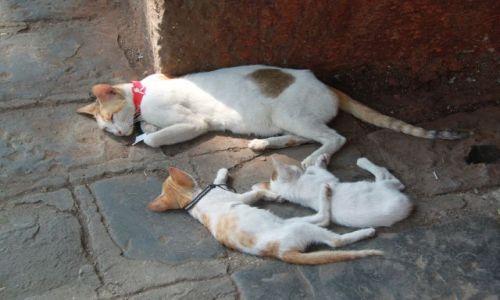 Zdjęcie INDIE / Maharasztra / Bombaj / Dla tych co lubią.....