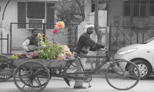 Zdjecie INDIE / Delhi / Old Delhi / ogrodnik