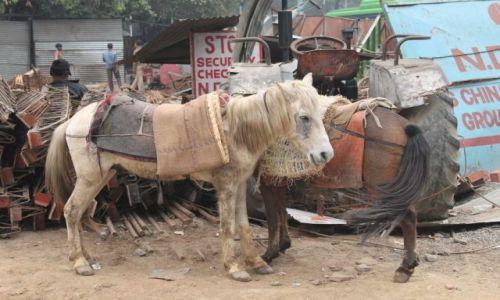 Zdjęcie INDIE / Delhi / Old Delhi / w oczekiwaniu