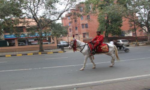 Zdjecie INDIE / Delhi / Old Delhi / jeżdziec