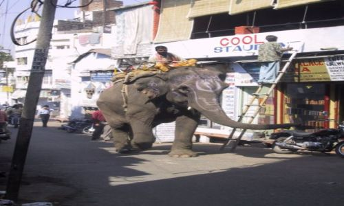 INDIE / Rajasthan / Jaipur / Ulica