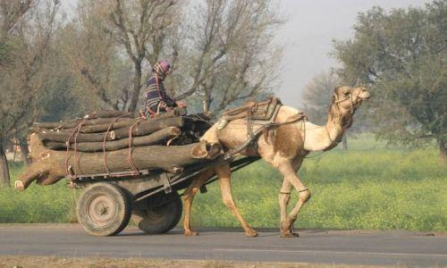 Zdjęcie INDIE / Rajasthan / Jaipur / Cargo