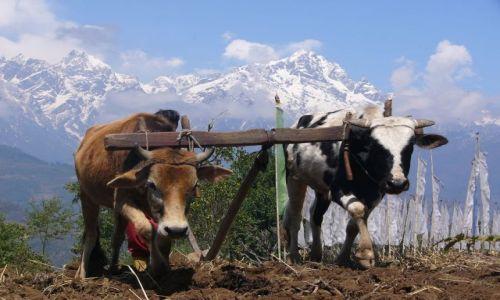 Zdjęcie INDIE / Sikkim / Szlak klasztorny / Orka