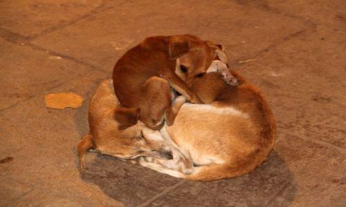Zdjęcie INDIE / Uttar Pradesh / Varanasi / Dogs